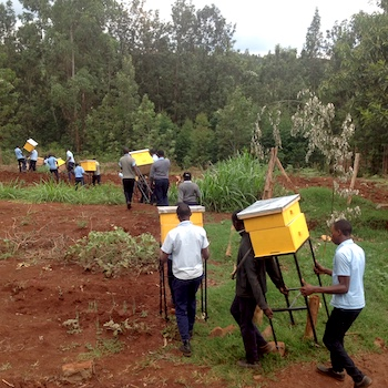 TGUP Project #158: Beehives 2020 in Kenya - 2020
